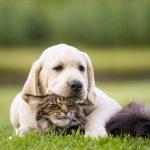 Cane e gatto: due intelligenze funzionali e istinti diversi